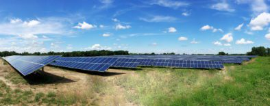 Rows of solar panels surrounded by trees