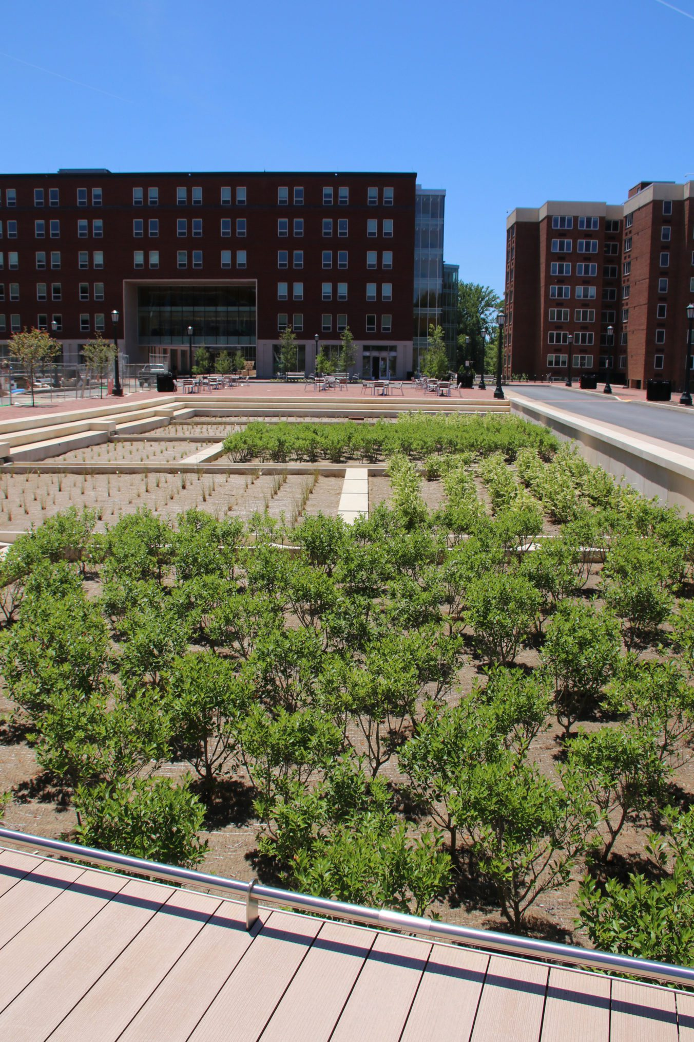 University of Virginia_Brandon Ave Infrastructure Biofilters